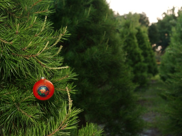 christmas tree farms are one of the leading farms that offer the real trees at competitive prices to the customers living in canada and other cities of the - Real Christmas Tree Prices